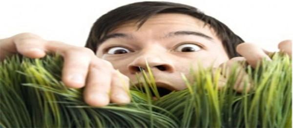 Как трава влияет на потенцию