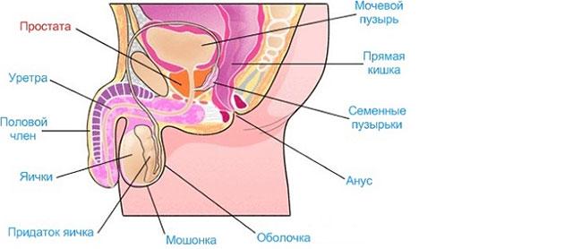 здоров крем от простатита отзывы врачей